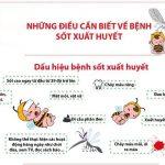 bệnh sốt xuất huyết