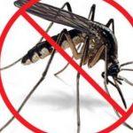 muỗi truyền bệnh viêm não Nhật Bản
