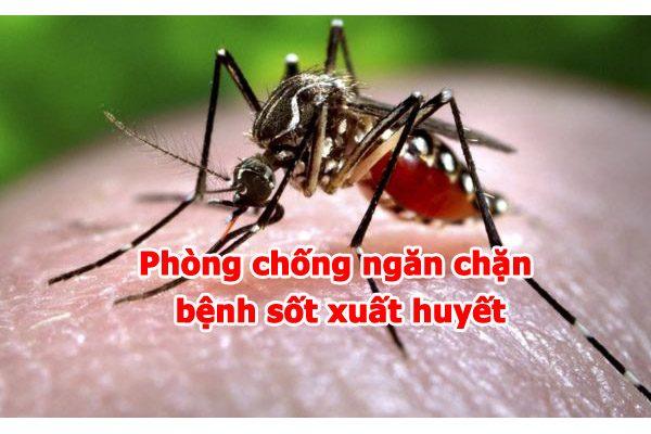 phong-chong-ngan-chan-benh-sot-xuat-huyet