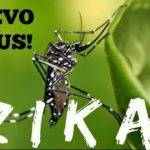 zika-virus-e1453998640470
