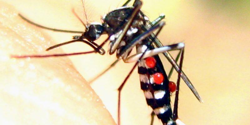 Muỗi truyền vi rút MVE có khả năng gây tử vong phát hiện ở Northern Territory