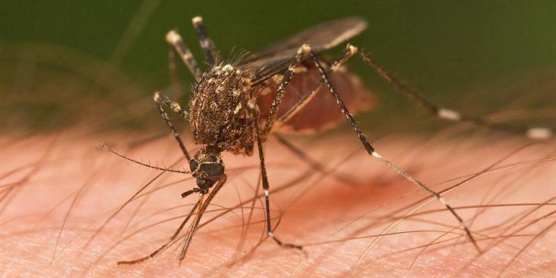 Phòng chống muỗi vào mùa đông