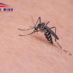 Mẹo ngăn muỗi không cần phun thuốc